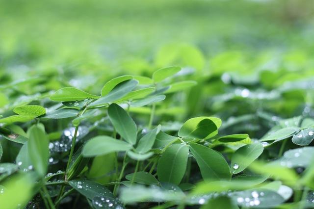green verde veardi verd vihrea viridis berde verd vert virdi verdo wert