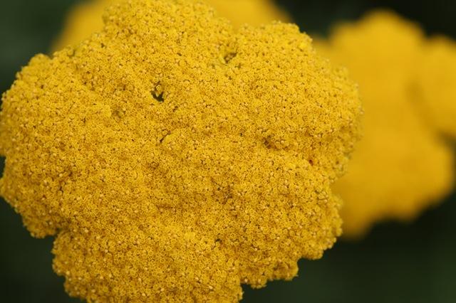 Жоўты Žuta Жълт Žlutá Жолта żółta  Жёлтый Жута Žltá Жовтий