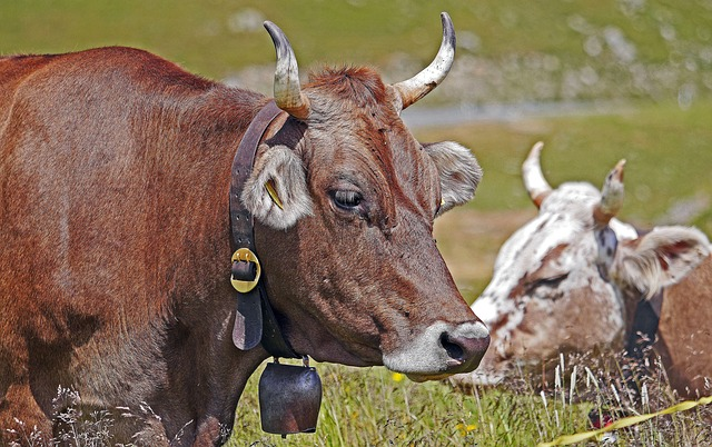 Lehm lehmä
