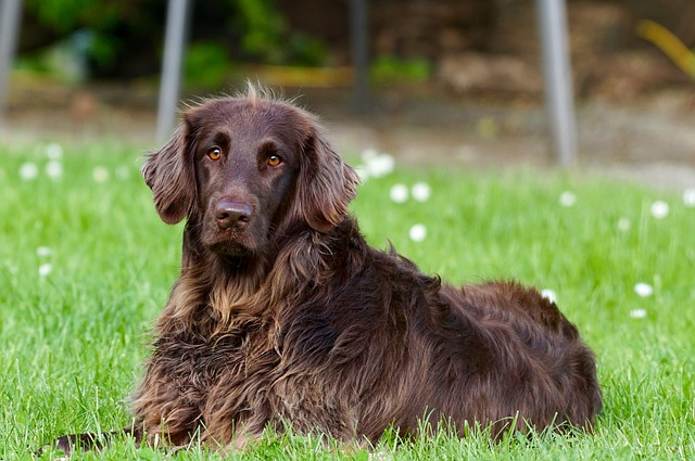 hond-hund-hundur